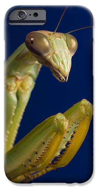 Mantodea iPhone Cases - Closeup Of Praying Mantis iPhone Case by Corey Hochachka