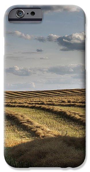 Clouds Over Canola Field On Farm iPhone Case by Dan Jurak