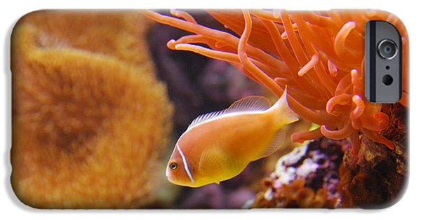 Clown Fish Photographs iPhone Cases - Clown Fish iPhone Case by Anthony Citro