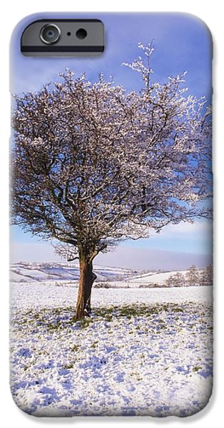 Co Antrim, Ireland Hawthorn Tree Known iPhone Case by The Irish Image Collection