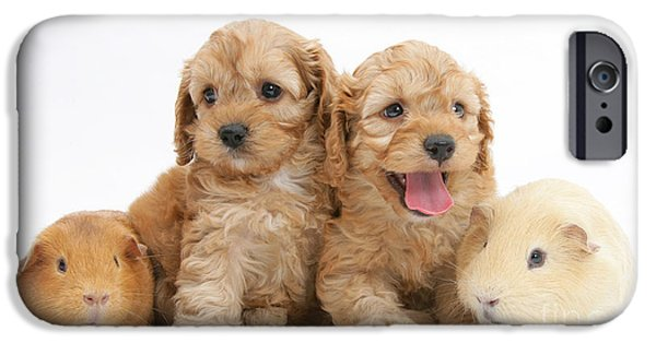 Cute Puppy iPhone Cases - Cockerpoo Puppies And Guinea Pigs iPhone Case by Mark Taylor