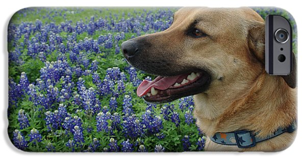 Black Dog iPhone Cases - Cody in Bluebonnets iPhone Case by Robyn Stacey