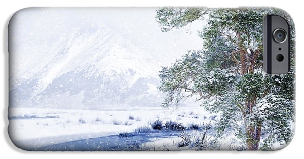Wolf Picture Art iPhone Cases - Cold and Windy iPhone Case by Svetlana Sewell
