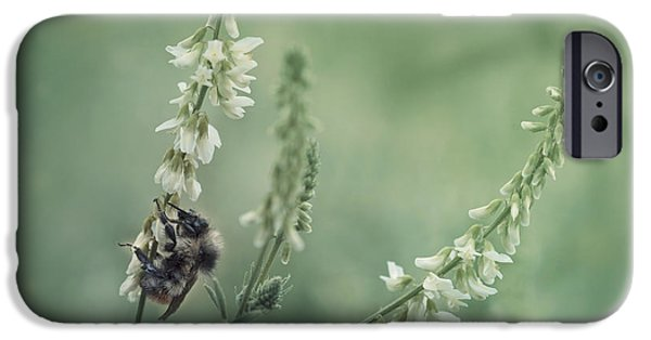 Fauna iPhone Cases - Collecting The Summer iPhone Case by Priska Wettstein