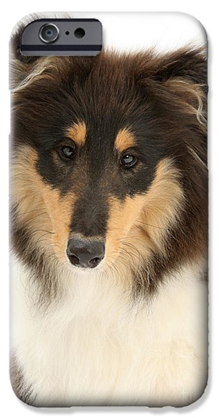 Dog Close-up iPhone Cases - Collie Portrait iPhone Case by Mark Taylor