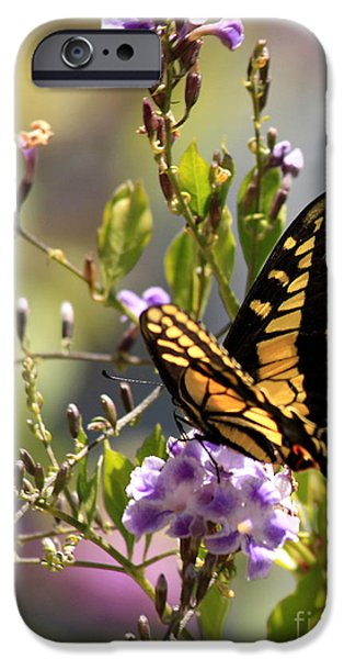 Garden iPhone Cases - Colorful Butterfly iPhone Case by Carol Groenen