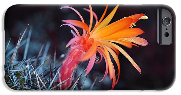 Cactus iPhone Cases - Colorful Cactus Flower iPhone Case by Rona Black
