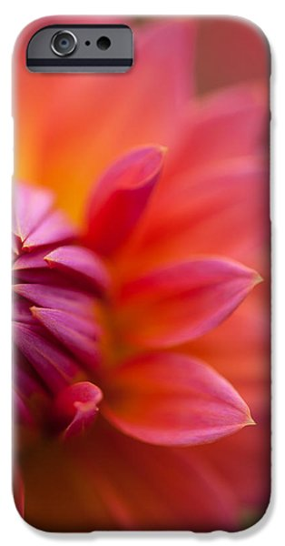 Dahlia iPhone Cases - Colorful Details iPhone Case by Mike Reid