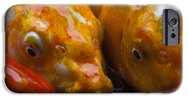Japanese School iPhone Cases - Colorful Koi Close-Up iPhone Case by Darcy Michaelchuk