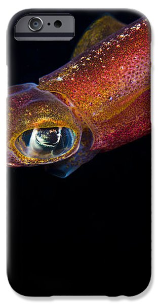 Colorful Oval Squid iPhone Case by Dave Fleetham - Printscapes