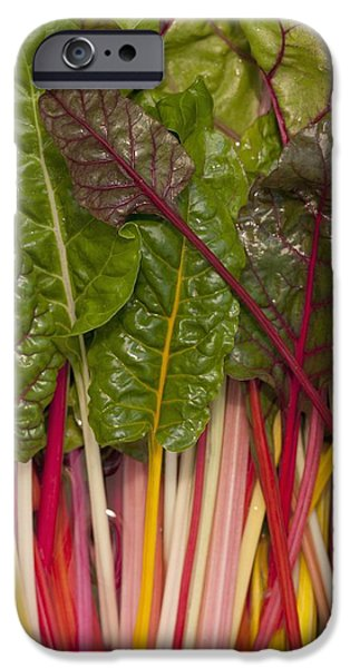 Swiss Chard iPhone Cases - Colorful Rainbow Swiss Chard Calgary iPhone Case by Michael Interisano