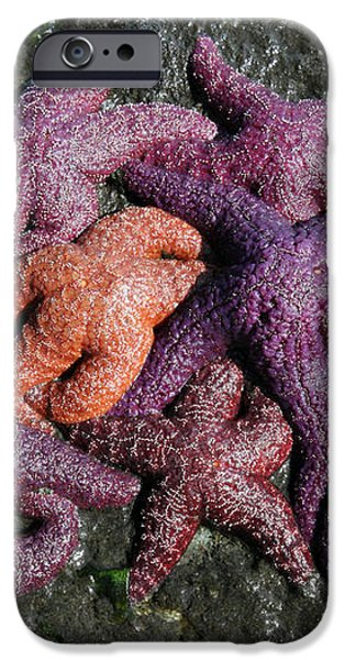 Colorful Starfish on the beach of Stanley park Vancouver BC Canada iPhone Case by Pierre Leclerc Photography