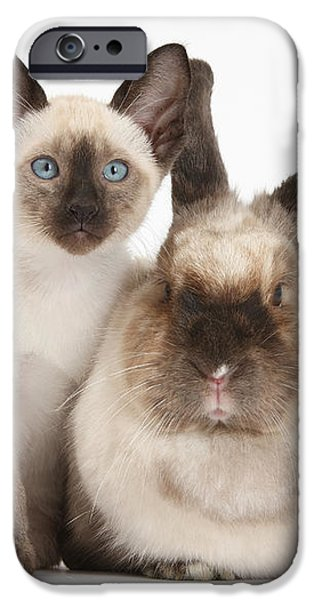 Colorpoint Rabbit And Siamese Kitten iPhone Case by Mark Taylor