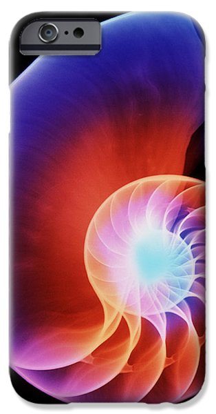Shell Spiral iPhone Cases - Coloured X-ray Of The Nautilus Shell iPhone Case by D. Roberts