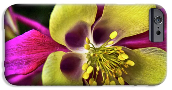 Columbine iPhone Cases - Columbine Flower iPhone Case by David Patterson