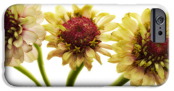 Sepia Flowers iPhone Cases - Coming At You iPhone Case by Rebecca Cozart
