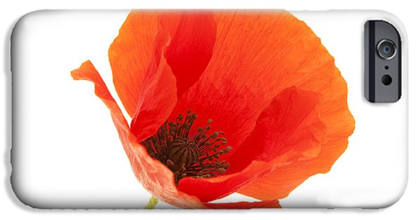 Cut-outs iPhone Cases - Common Poppy flower iPhone Case by Fabrizio Troiani