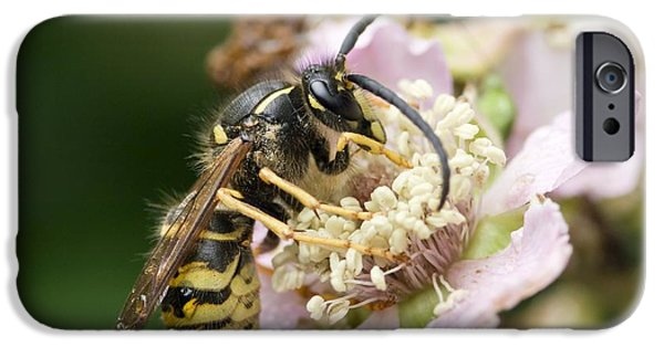 Eating Entomology iPhone Cases - Common Wasp Feeding On A Flower iPhone Case by Adrian Bicker