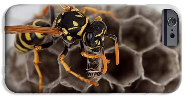 Hornets Nest iPhone Cases - Common Wasp iPhone Case by Ted Kinsman