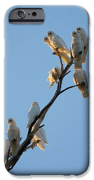 Roosting iPhone Cases - Communa-Tree iPhone Case by Mike  Dawson
