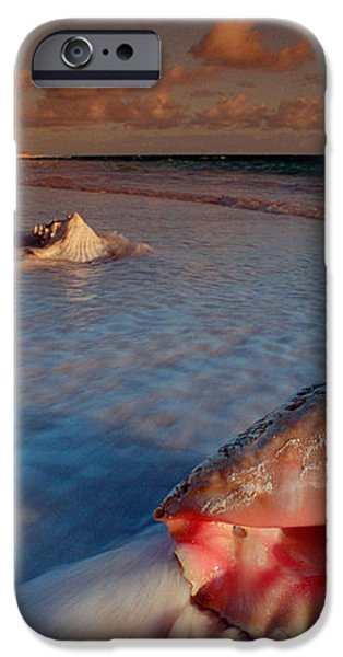 Conch Shell on Beach iPhone Case by Novastock and Photo Researchers