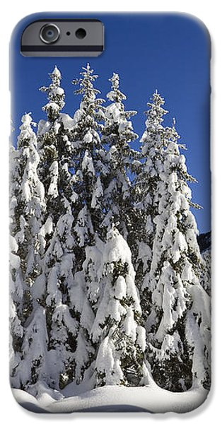 Coniferous Forest In Winter iPhone Case by Konrad Wothe