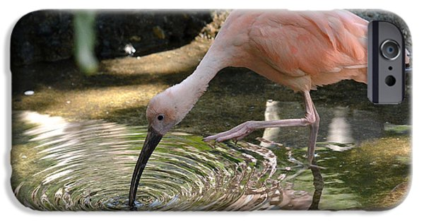 Ibis iPhone Cases - Cool Waters iPhone Case by Fraida Gutovich