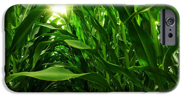 Fields iPhone Cases - Corn Field iPhone Case by Carlos Caetano