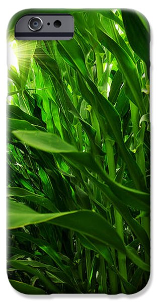 Corn Field iPhone Case by Carlos Caetano