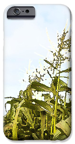 Corn in Summer iPhone Case by Artist and Photographer Laura Wrede