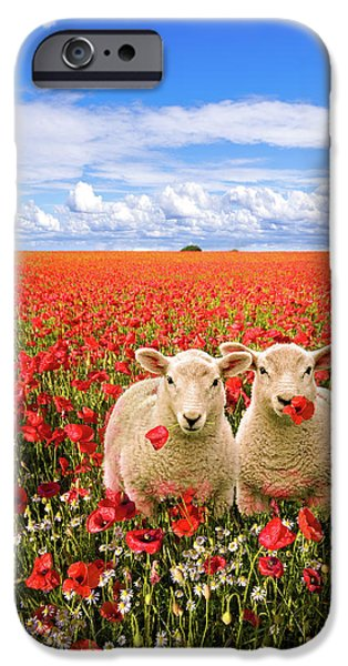 Meadow Photographs iPhone Cases - Corn Poppies And Twin Lambs iPhone Case by Meirion Matthias