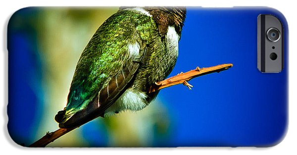Haybale iPhone Cases - Costas Hummingbird iPhone Case by Robert Bales