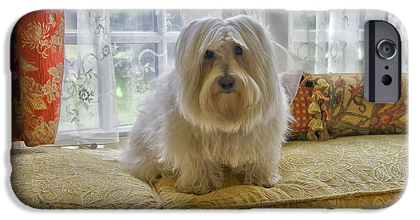 Coton Tulear iPhone Cases - Coton de Tulear iPhone Case by Madeline Ellis