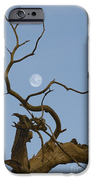 Moonscape iPhone Cases - Cotton Moon iPhone Case by Sophie De Roumanie