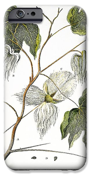 1796 iPhone Cases - Cotton Plant, 1796 iPhone Case by Granger