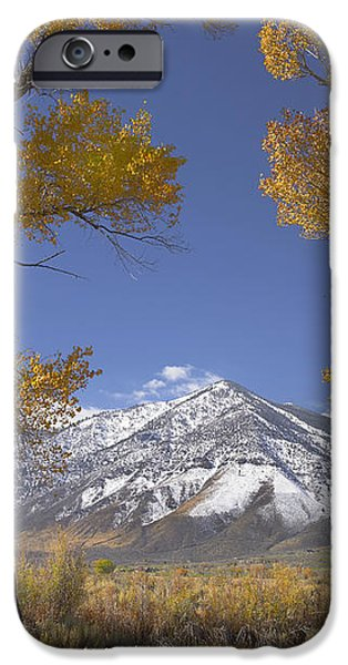 Cottonwood Trees Fall Foliage Carson iPhone Case by Tim Fitzharris