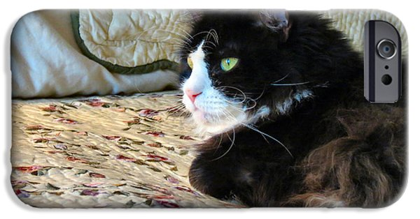 Witch Halloween Cat Wicca Photographs iPhone Cases - Country Kitty iPhone Case by Michelle Milano