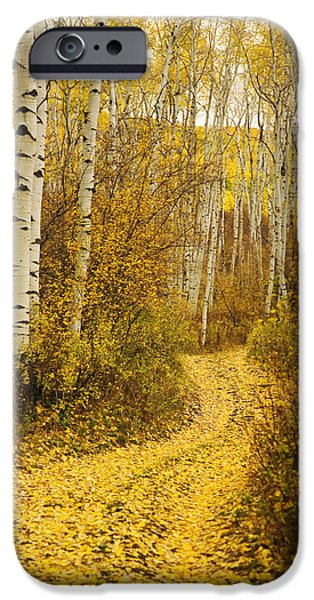 Northern Colorado iPhone Cases - Country Road and Aspens 1 iPhone Case by Ron Dahlquist - Printscapes