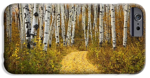 Northern Colorado iPhone Cases - Country Road and Aspens 2 iPhone Case by Ron Dahlquist - Printscapes