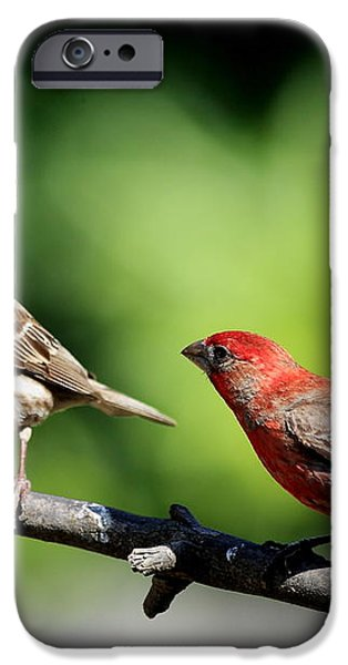 Courtship In Nature . 40D8073 iPhone Case by Wingsdomain Art and Photography