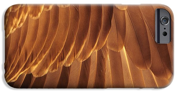 Smithsonian Photographs iPhone Cases - Coverts and Primaries iPhone Case by Tony Beck