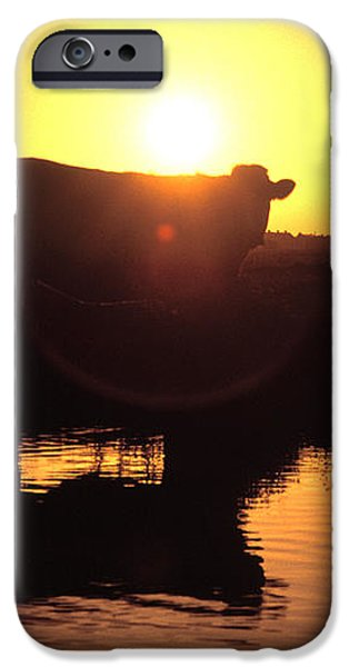 Cow at Sundown iPhone Case by Picture Partners and Photo Researchers