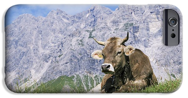 Agricultural iPhone Cases - Cow iPhone Case by Bjorn Svensson