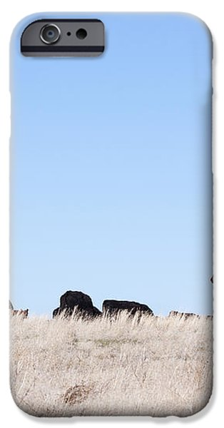 Cowboy and Cattle iPhone Case by Cindy Singleton