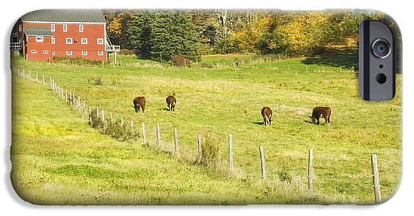 Barbed Wire Fences iPhone Cases - Cows Grazing On Grass In Farm Field Fall Maine iPhone Case by Keith Webber Jr