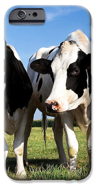 Cows iPhone Case by Jane Rix
