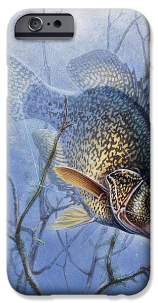 Jon Q Wright iPhone Cases - Crappie Cover Tangle iPhone Case by JQ Licensing