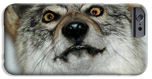 Nature Center Pond iPhone Cases - Crazy like a fox iPhone Case by LeeAnn McLaneGoetz McLaneGoetzStudioLLCcom