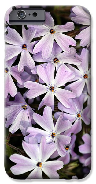 Phlox iPhone Cases - Creeping Phlox (phlox Subulata) iPhone Case by Dr Keith Wheeler