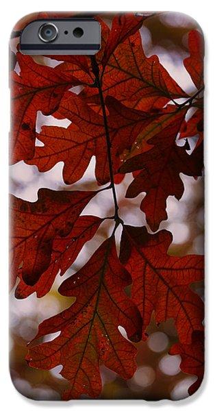 Foliage Photographs iPhone Cases - Crimson Oak iPhone Case by Rick Berk
